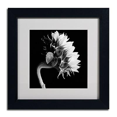 Trademark Fine Art ALI0294-B1111MF