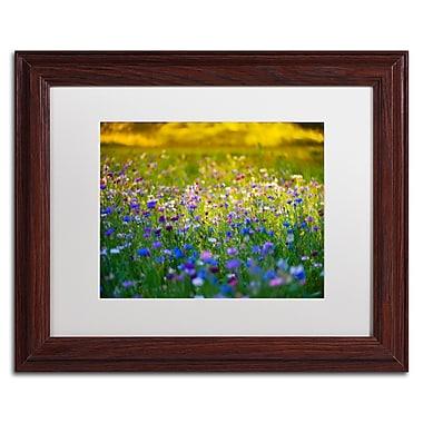 Trademark Fine Art PSL0332-W1114MF