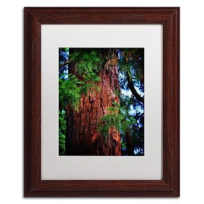 Trademark Fine Art PSL0306-W1114MF