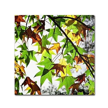 Trademark Fine Art BC0122-C3535GG