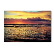 "Trademark Fine Art BC0131-C-GG ""Morning Glory"" by Beata Czyzowska Young Frameless Art"