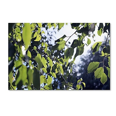 Trademark Fine Art BC0154-C1219GG
