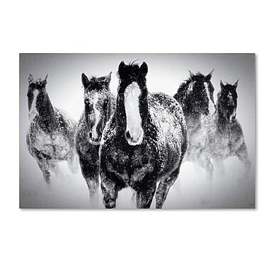 Trademark Fine Art WAP0103-C3047GG
