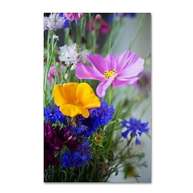 Trademark Fine Art PSL0334-C1219GG