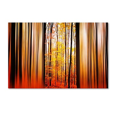 Trademark Fine Art PSL0305-C1624GG