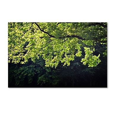 Trademark Fine Art PSL0313-C1624GG