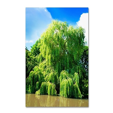 Trademark Fine Art PSL0329-C2232GG