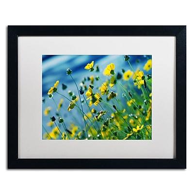 Trademark Fine Art BC0141-B1620MF