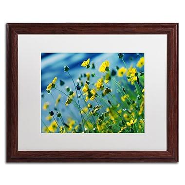 Trademark Fine Art BC0141-W1620MF