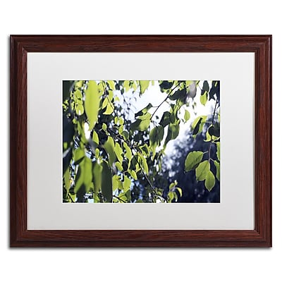 Trademark Fine Art BC0154-W1620MF