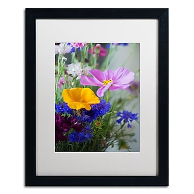 Trademark Fine Art PSL0334-B1620MF