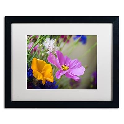 Trademark Fine Art PSL0335-B1620MF