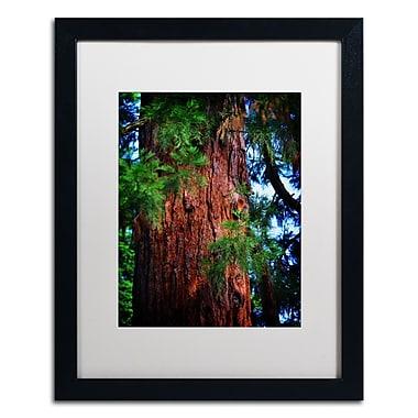 Trademark Fine Art PSL0306-B1620MF