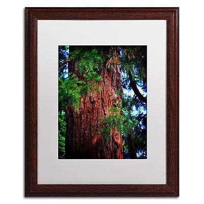 Trademark Fine Art PSL0306-W1620MF