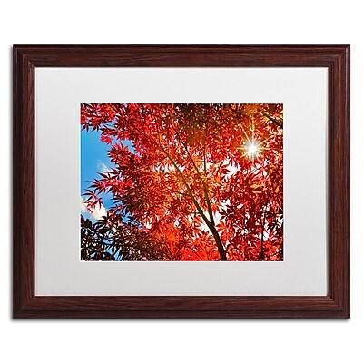 Trademark Fine Art PSL0315-W1620MF