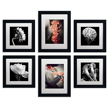 Trademark Fine Art TFA-FLR1-MF Floral Gallery Wall Collection, 6/Set