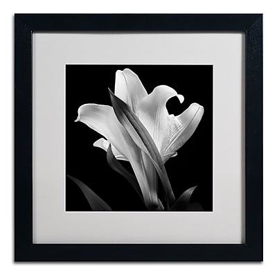 Trademark Fine Art ALI0289-B1616MF
