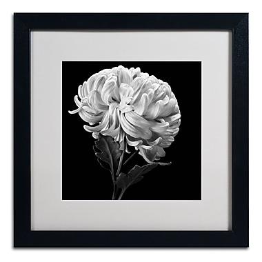 Trademark Fine Art ALI0292-B1616MF