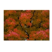 "Trademark Fine Art KS0137-C2232GG ""Autumn Maple Splendor"" by Kurt Shaffer 22"" x 32"" Frameless Art"