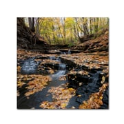 "Trademark Fine Art KS0140-C1818GG ""Lakeview Autumn Falls"" by Kurt Shaffer 18"" x 18"" Frameless Art"