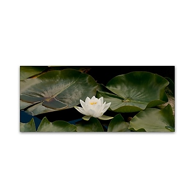 Trademark Fine Art KS0145-C2047GG