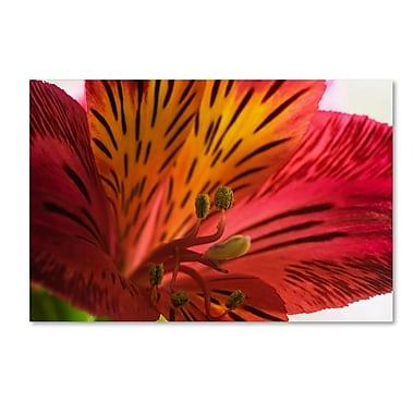 Trademark Fine Art KS0157-C3047GG