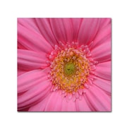"""Trademark Fine Art KS0158-C2424GG """"Pink"""" by Kurt Shaffer 24"""" x 24"""" Frameless Art"""