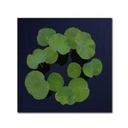 "Trademark Fine Art KS0175-C-GG ""Giant Lily Pad Abstract"" by Kurt Shaffer Frameless Art"
