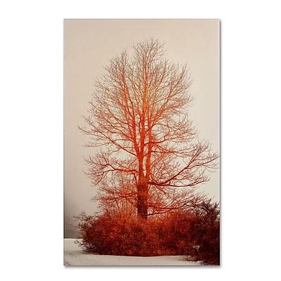 Trademark Fine Art LBR0275-C2232GG