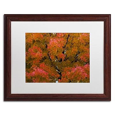 Trademark Fine Art KS0137-W1620MF