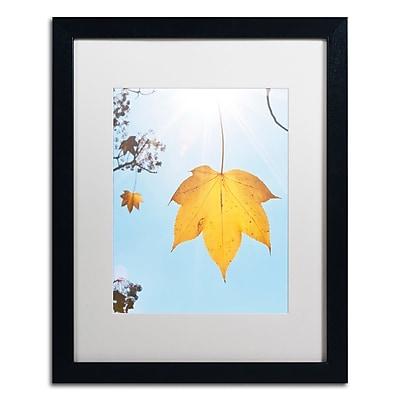 Trademark Fine Art KS0146-B1620MF