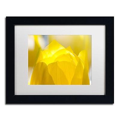 Trademark Fine Art KS0156-B1114MF