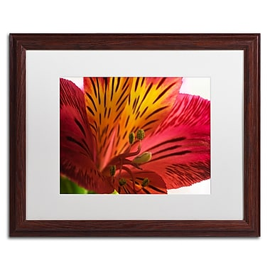 Trademark Fine Art KS0157-W1620MF