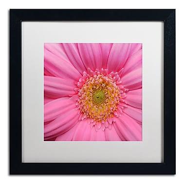 Trademark Fine Art KS0158-B1616MF