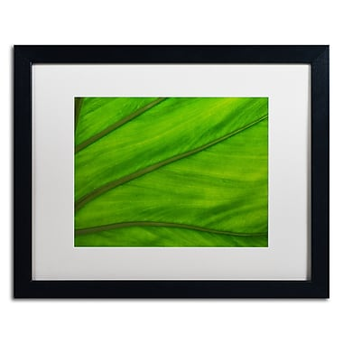 Trademark Fine Art KS0162-B1620MF