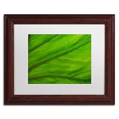 Trademark Fine Art KS0162-W1114MF