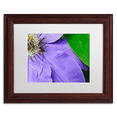 Trademark Fine Art KS0165-W1114MF