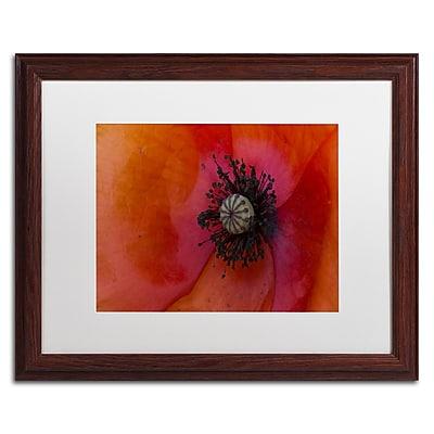 Trademark Fine Art KS0177-W1620MF