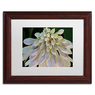 Trademark Fine Art KS0178-W1114MF