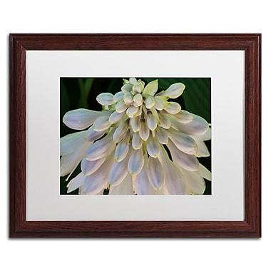 Trademark Fine Art KS0178-W1620MF