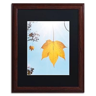 Trademark Fine Art KS0146-W1620BMF