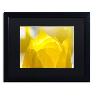 Trademark Fine Art KS0156-B1620BMF