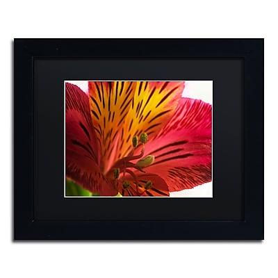 Trademark Fine Art KS0157-B1114BMF