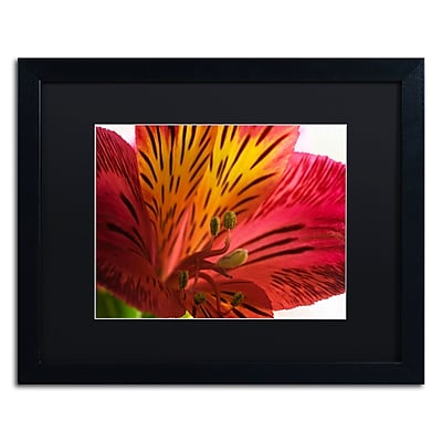 Trademark Fine Art KS0157-B1620BMF