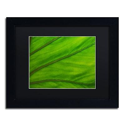 Trademark Fine Art KS0162-B1114BMF