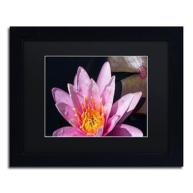 Trademark Fine Art KS0176-B1114BMF