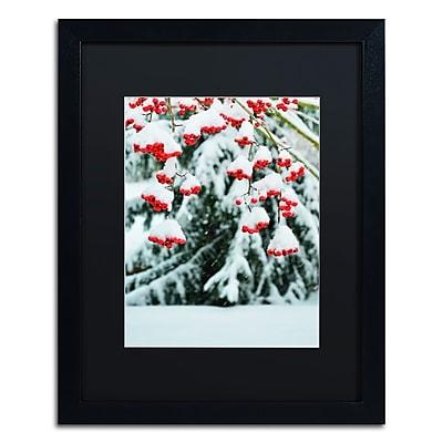 Trademark Fine Art KS0189-B1620BMF