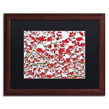 Trademark Fine Art KS0190-W1620