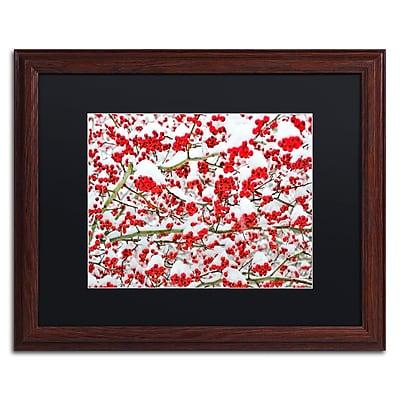 Trademark Fine Art KS0190-W1620BMF