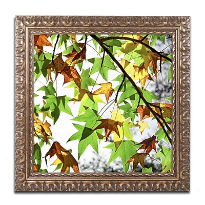 Trademark Fine Art BC0122-G1616F
